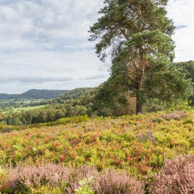 Bickerton Hill in August 18