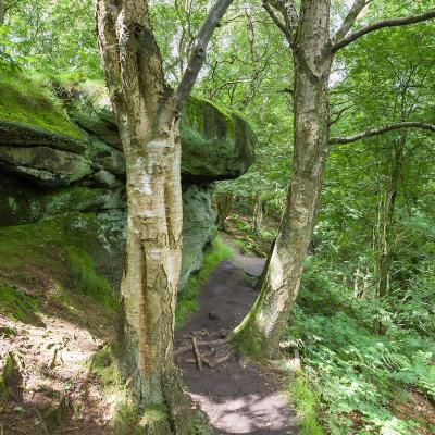 Path and Sandstone Geology on Bickerton Hill 2